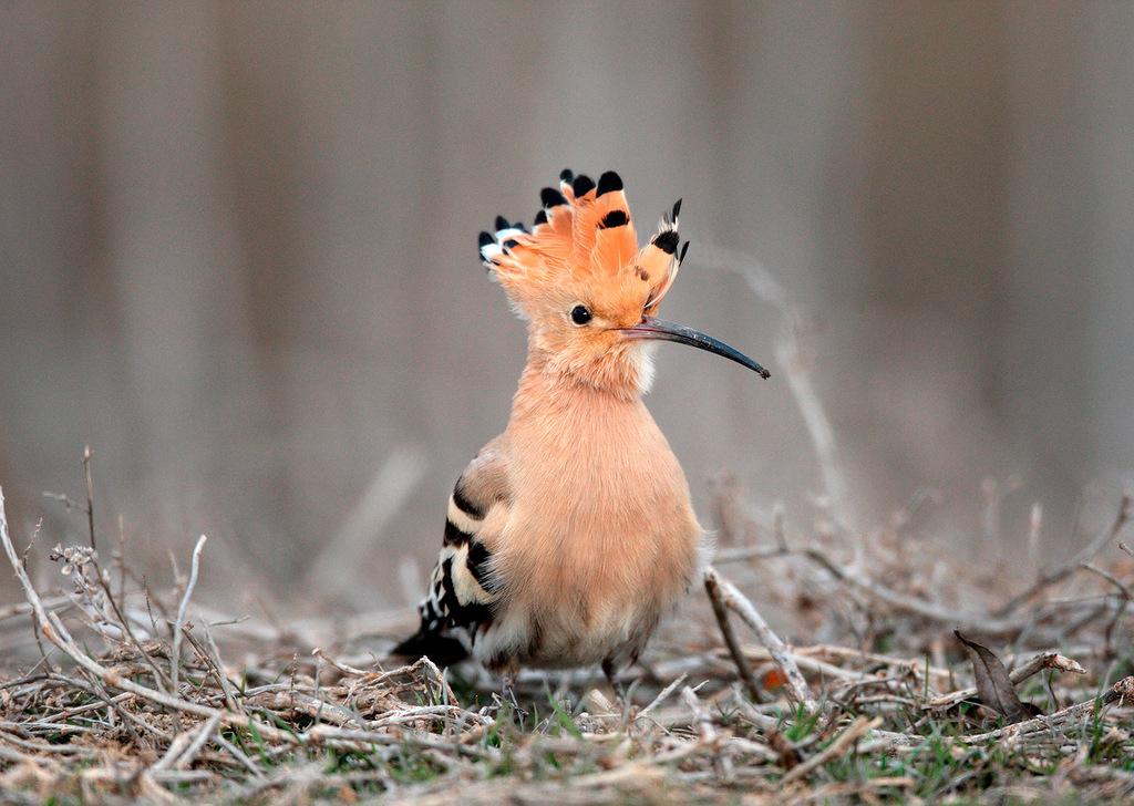 A migração dos pássaros russos no inverno width=
