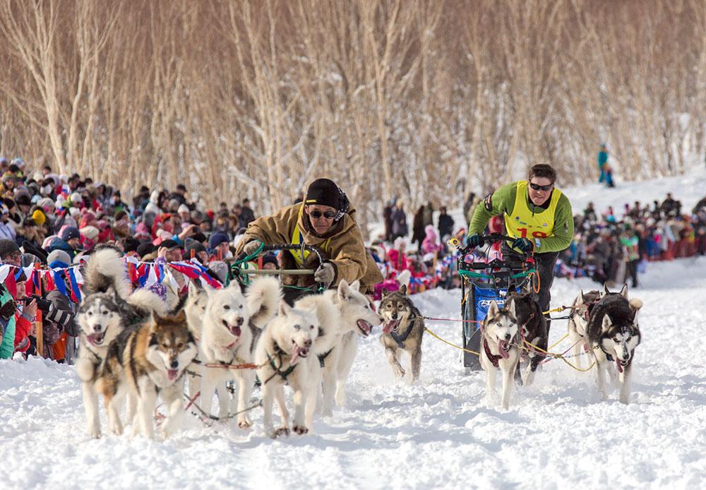Beringia, Balap Kereta Luncur Anjing Terjauh di Dunia