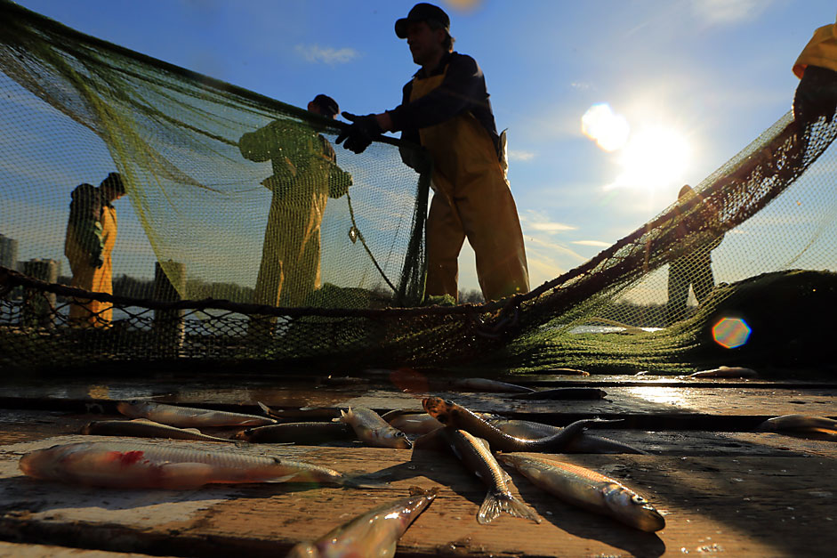 Ekspor Produk Hasil Laut Indonesia ke Rusia Meningkat Hampir Seratus Persen