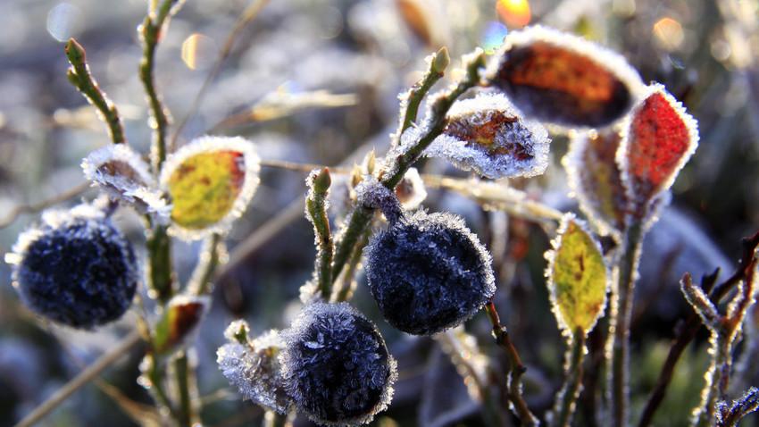 Musim gugur di Murmansk.