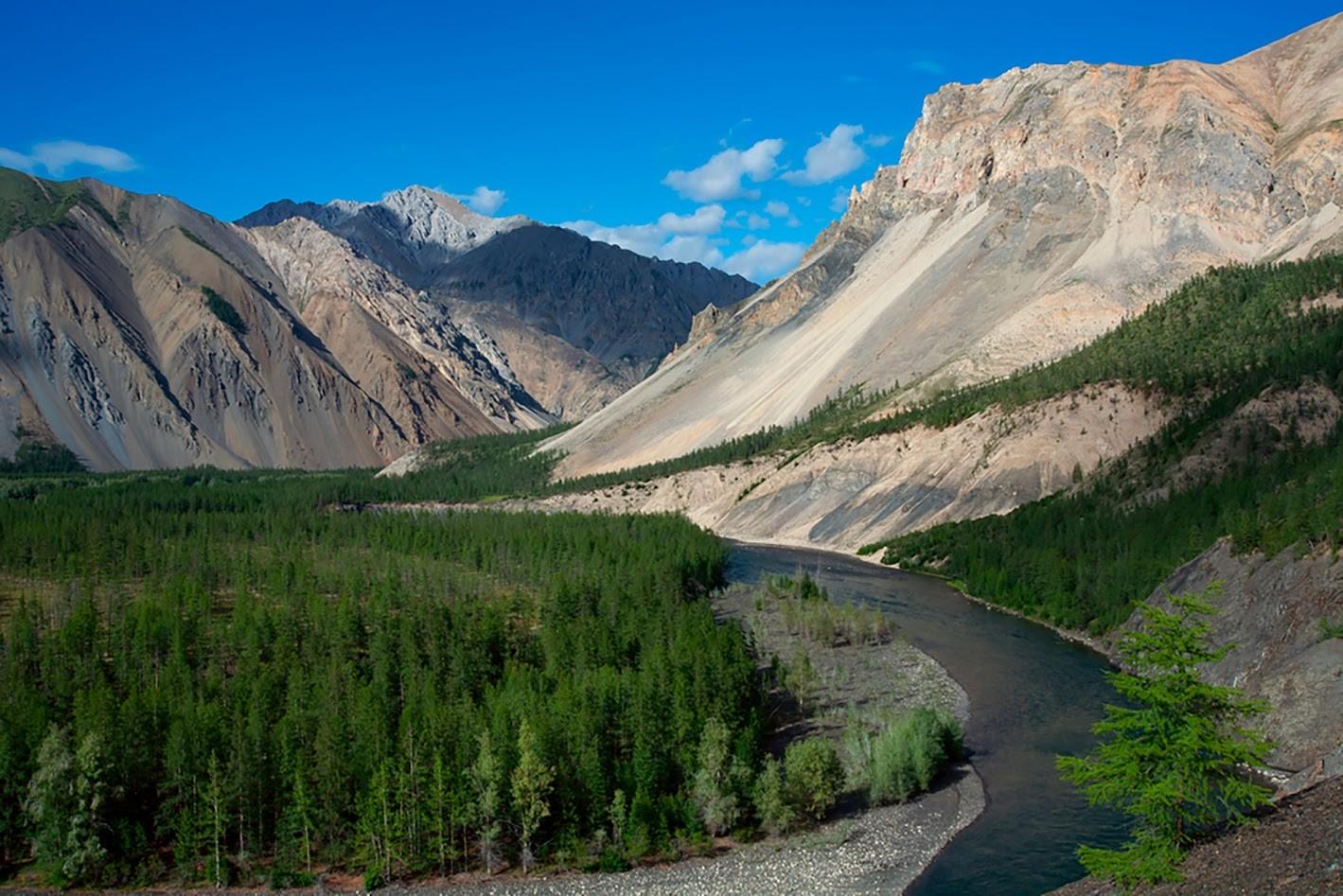 Čudovita gorska reka in tajga. Reka Omuljovka, Magadan.