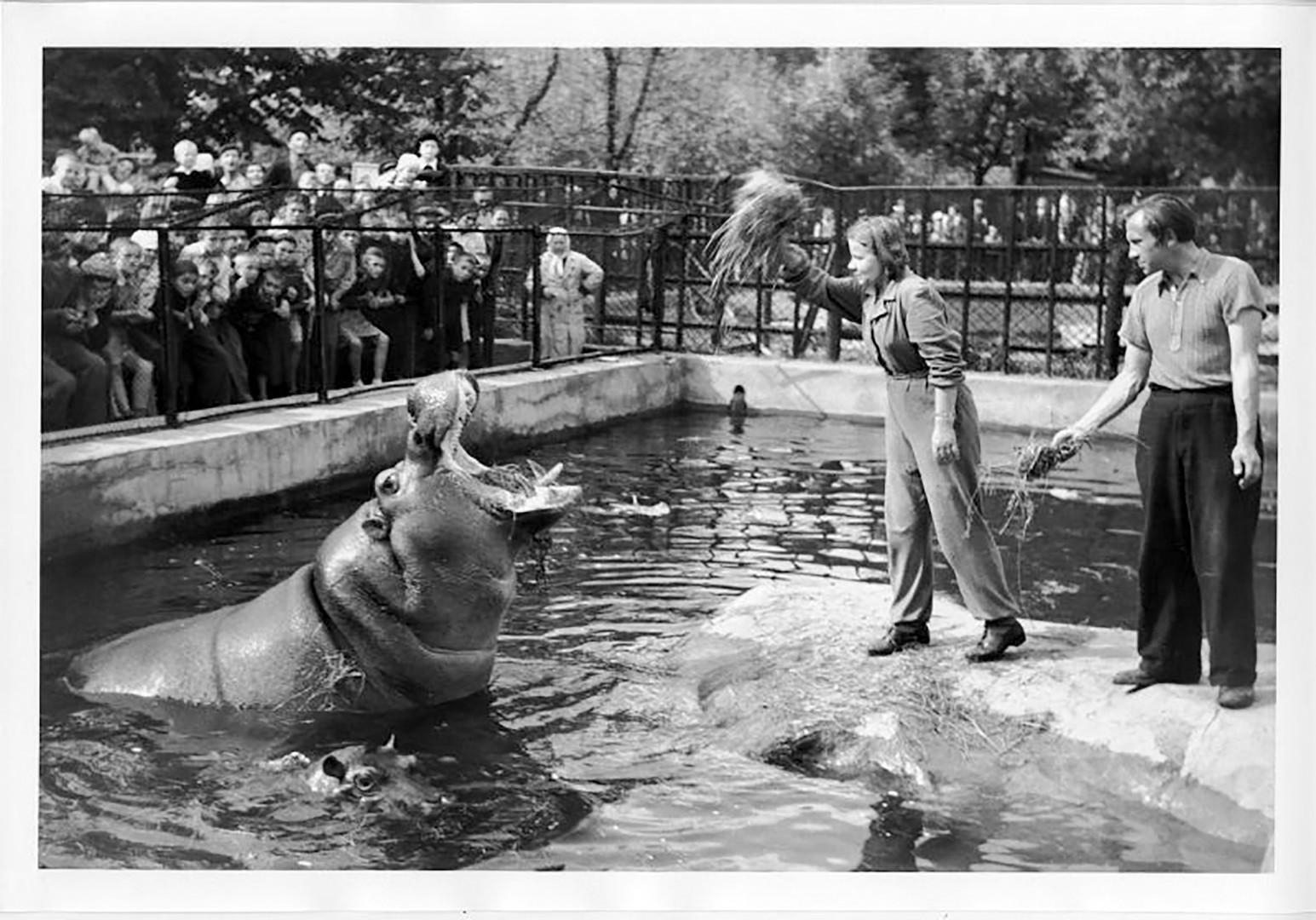 Работници в зоопарка и хипопотам 1946 г.