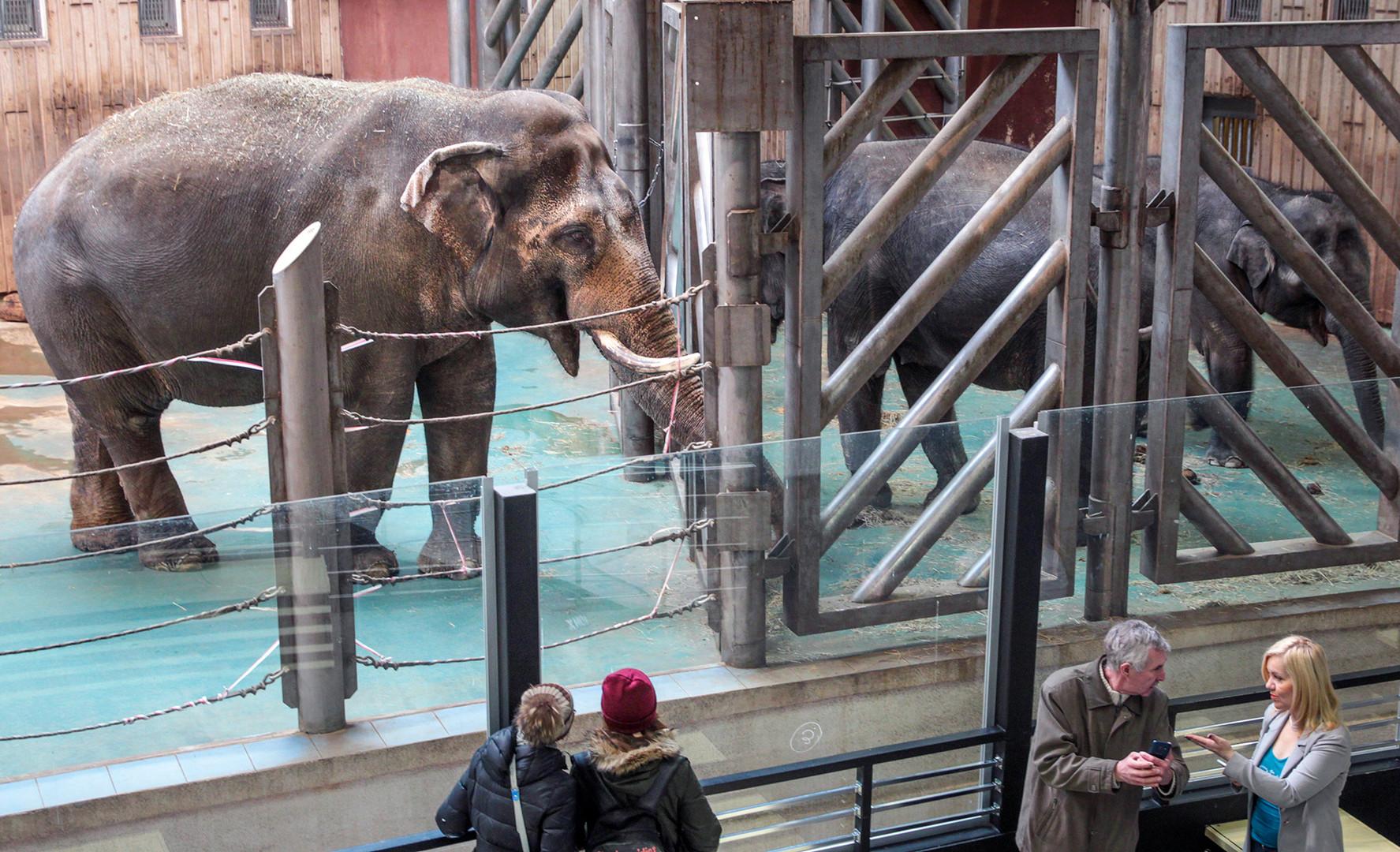 18 март 2016 г. Слон в Московския зоопарк.