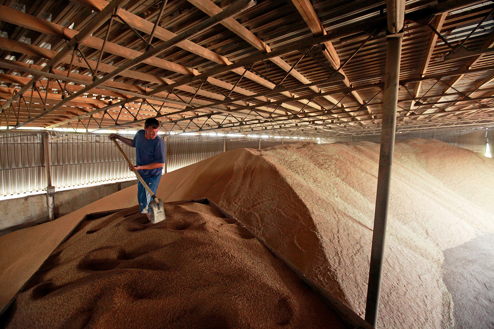 A worker shovels grain in a warehouse in the the village of Konstantinovo, some 60 km (37 miles) from the Southern Russian city of Stavropol.