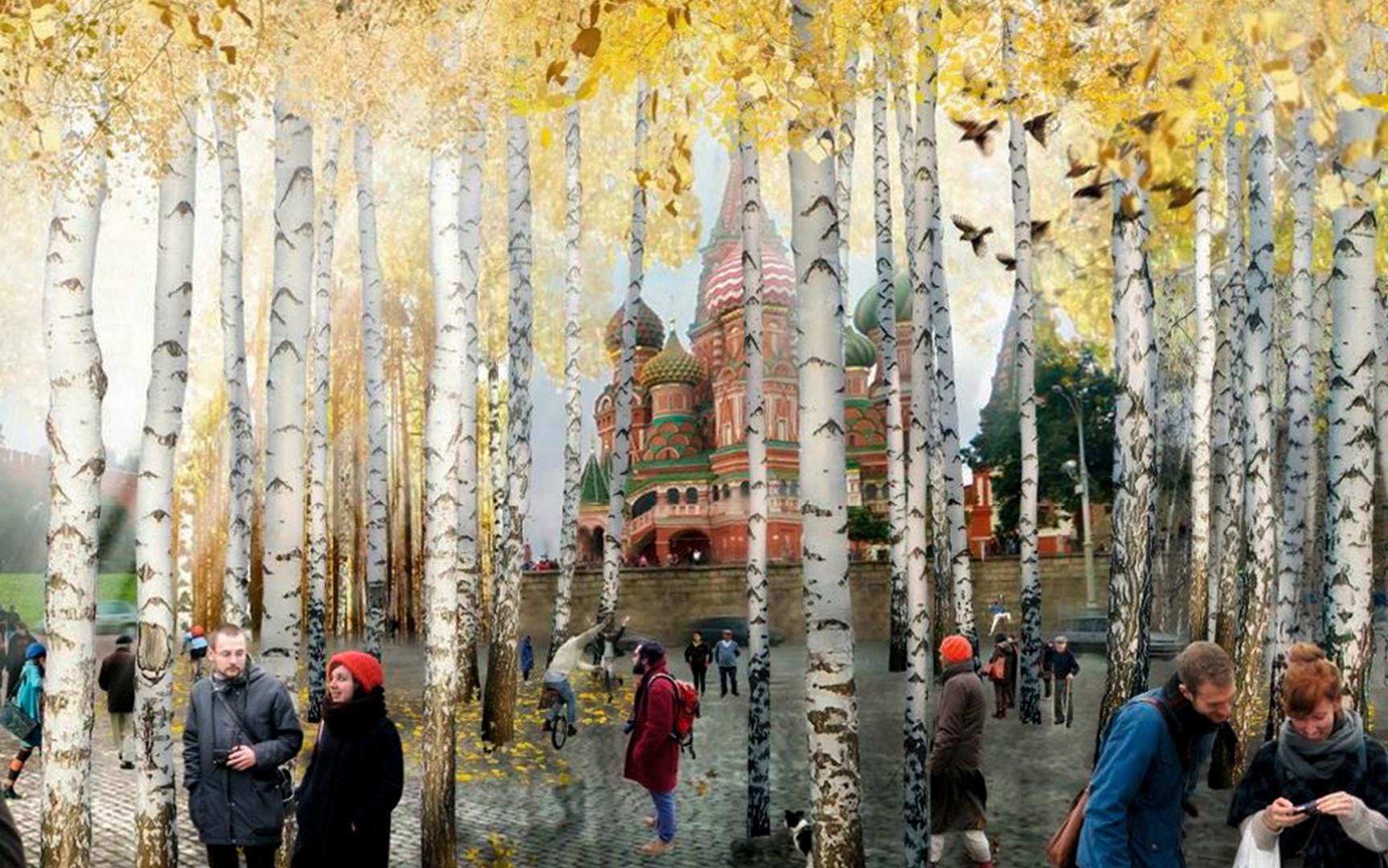 Birken, Birken, Birken - auch im neuen Moskauer Sarjadje-Park
