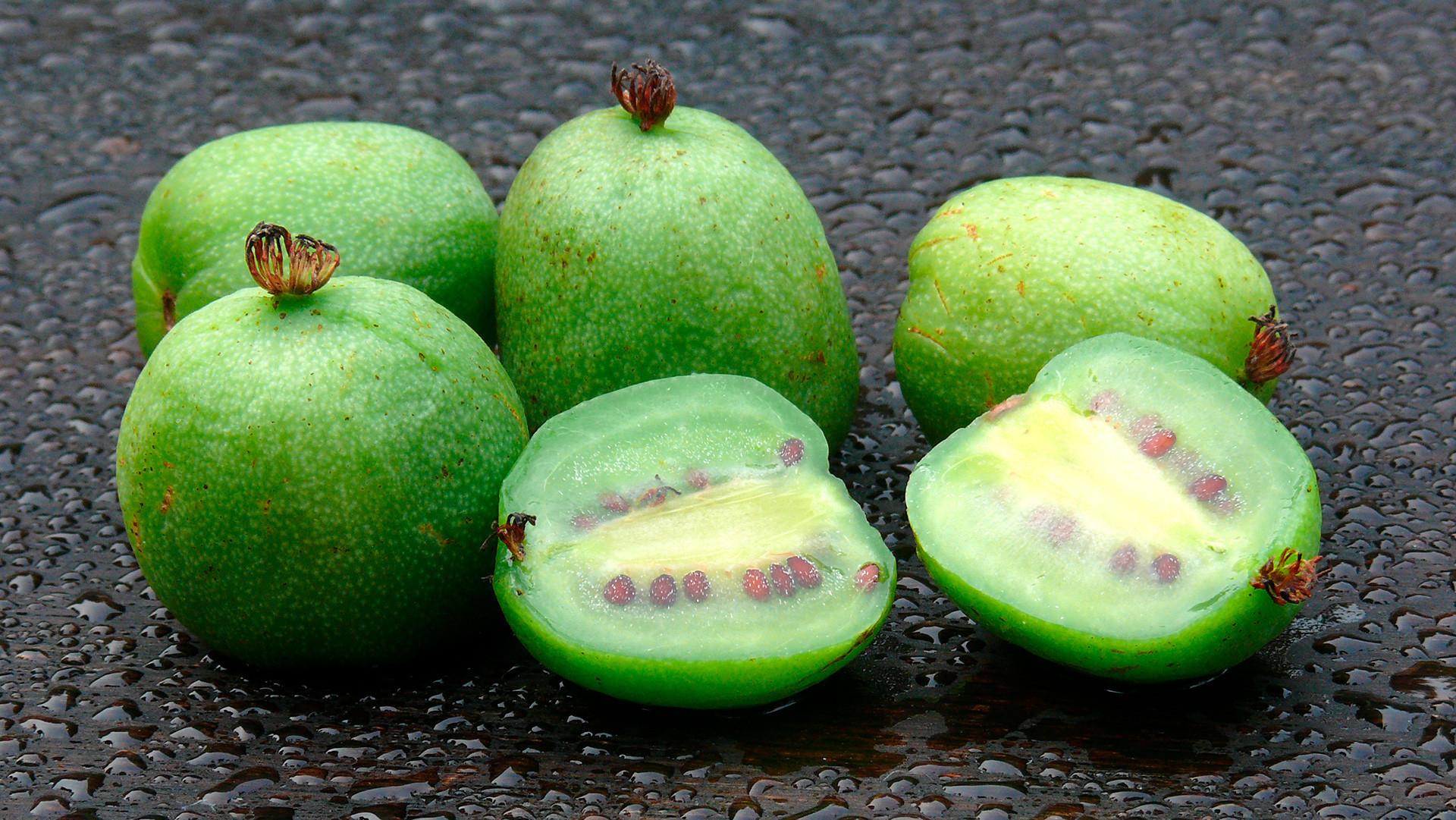 Actinidia looks like a small kiwi fruit.