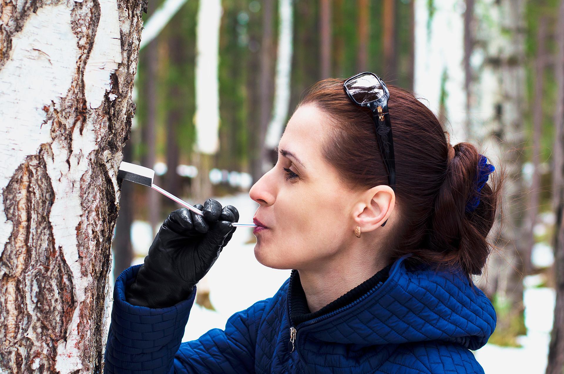 Дали некогаш сте пробале сок од брезово дрво?