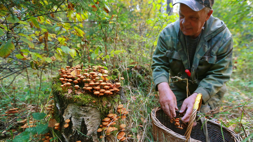 A man picking mushrooms in the woods