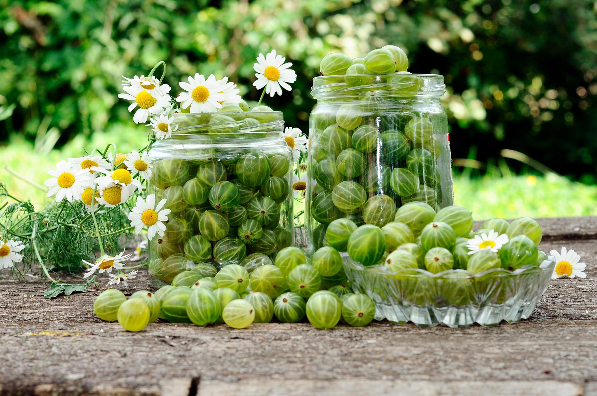 """Gooseberry sering disebut """"anggur utara""""."""