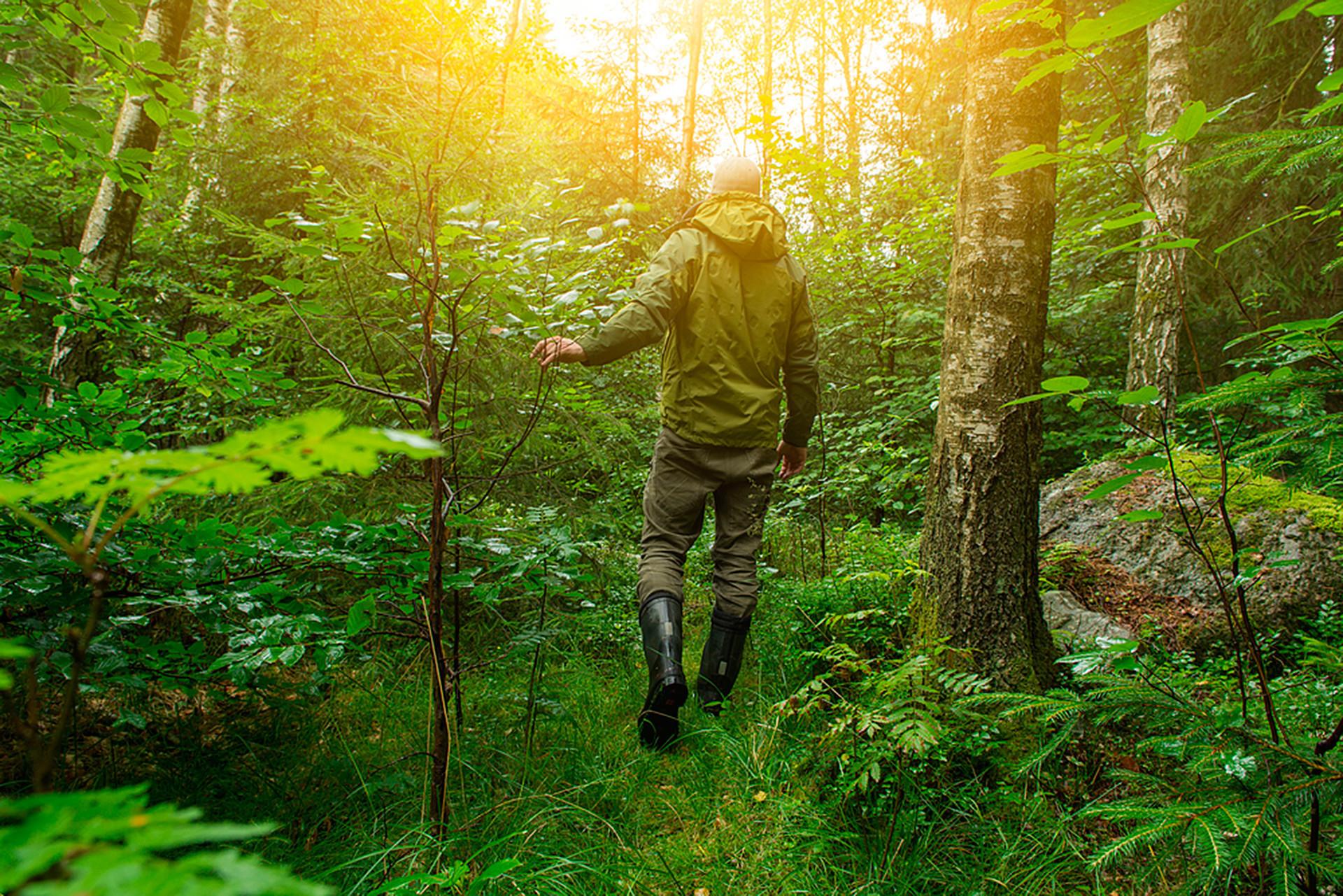 Čovjek hoda kroz gustu šumu.