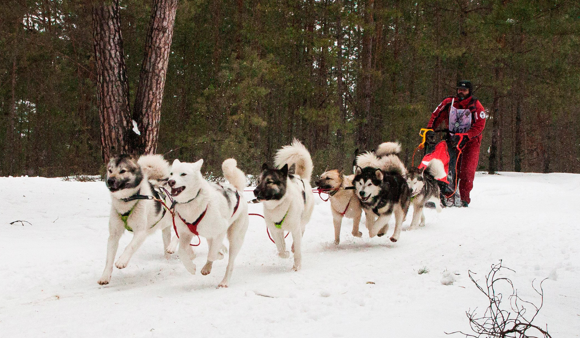 In Nizhny Novgorod, be prepared for scores of cute, blue-eyed huskies.