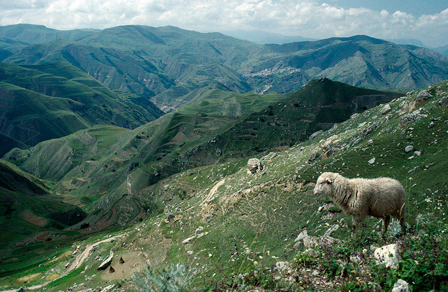 Dagestan Old silk road through mountain landscape with sheep on rocky hillside in the foreground