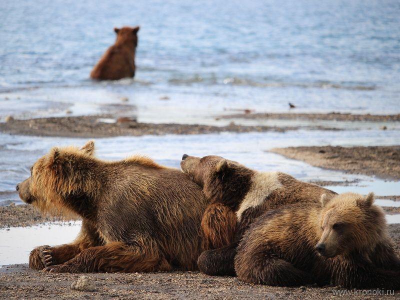Јужнокамчатски федерални природни резерват