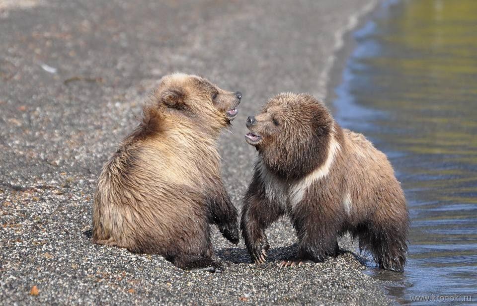 Јужнокамчатски федерален природен резерват