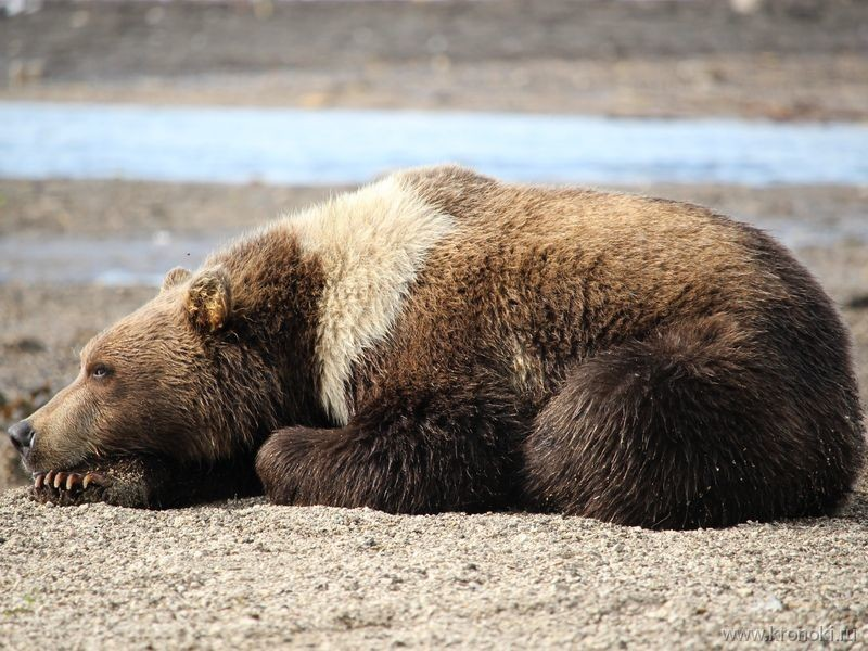 Južnokamčatski federalni prirodni rezervat