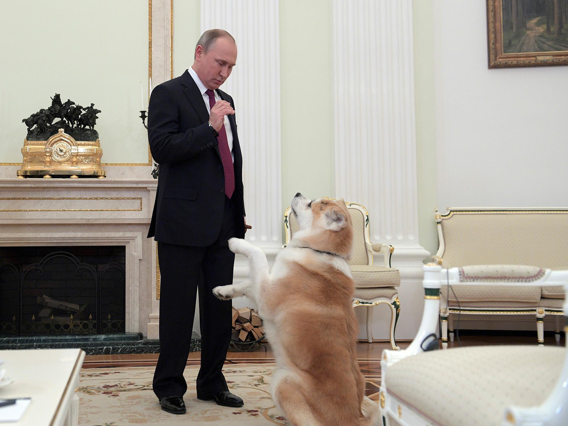 Руският президент Владимир Путин с кучето си порода акита ину на име Юме в Кремъл.