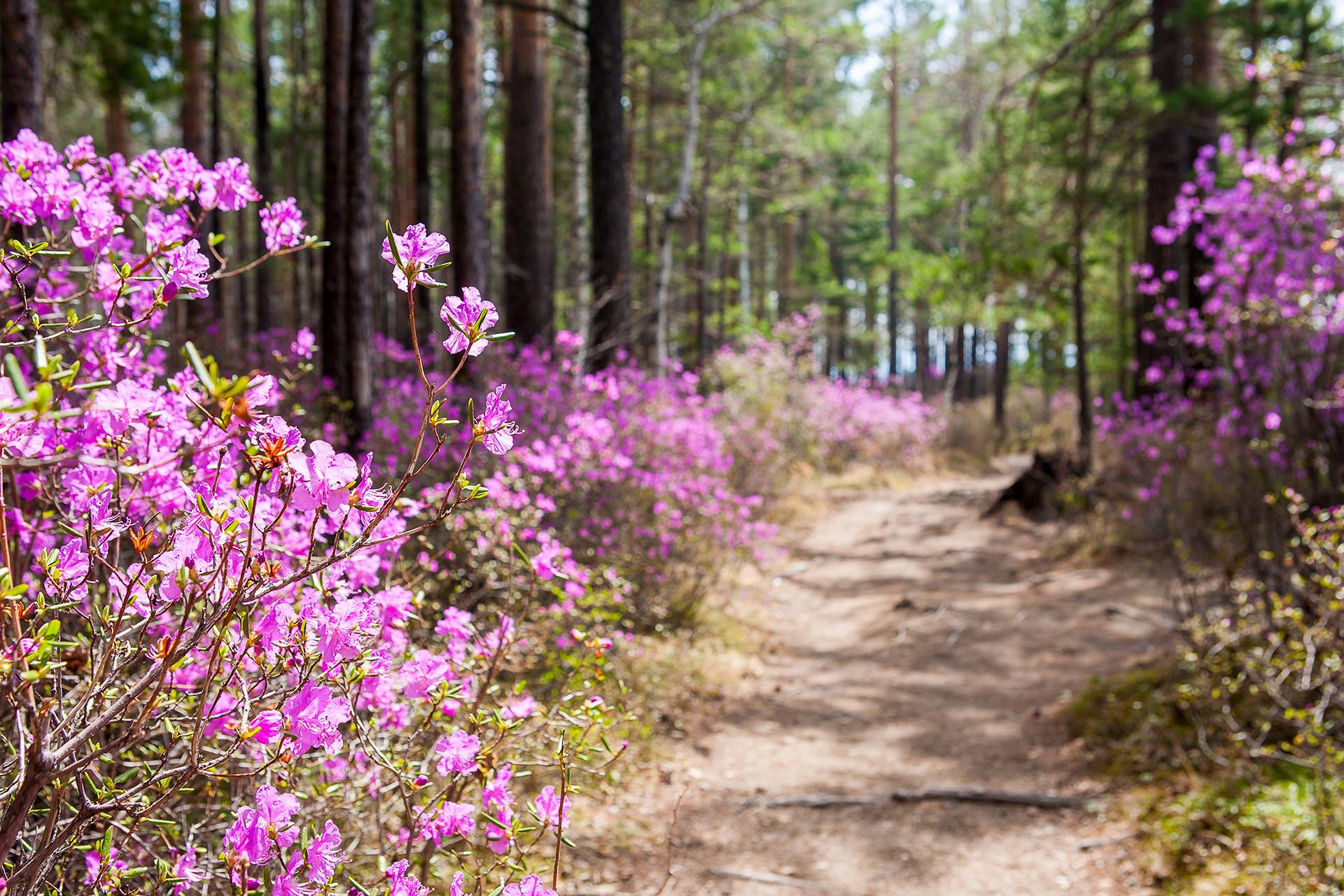 Irkutsk in spring