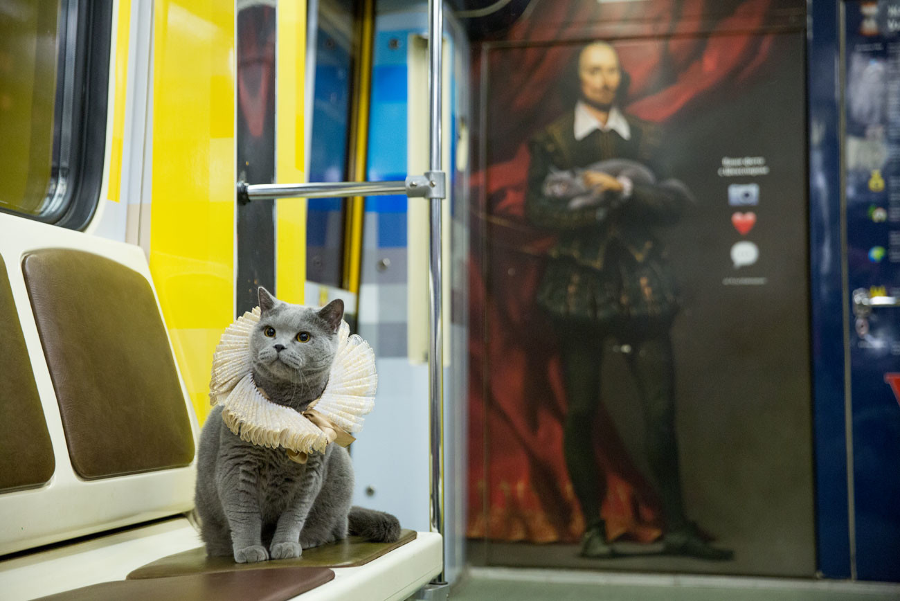 A cat in the Shakespeare train of Moscow metro.