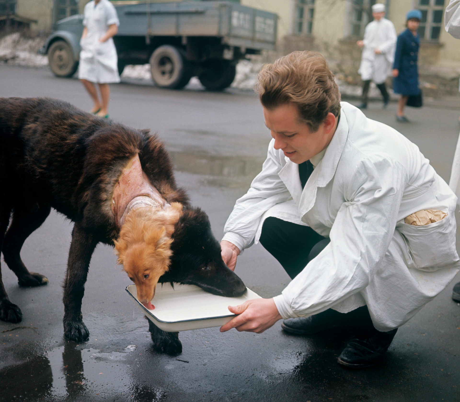 A dog with two heads: How a Soviet doctor pioneered organ ... - photo#21