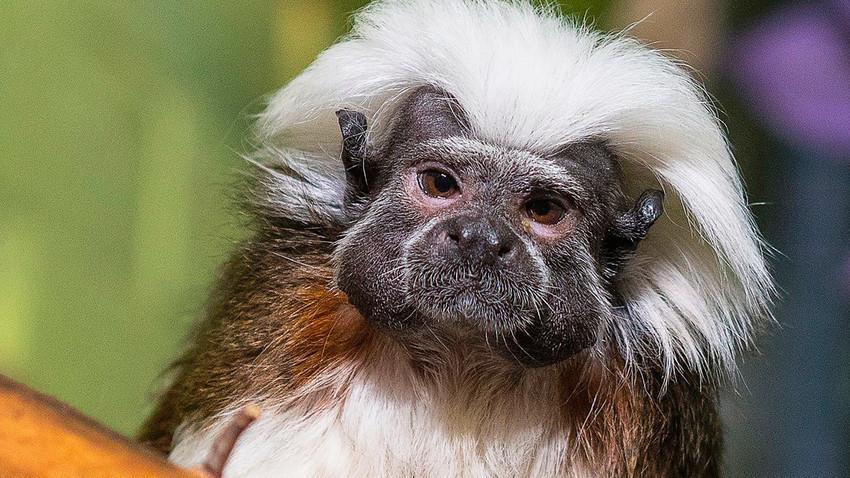 Majmun Einstein