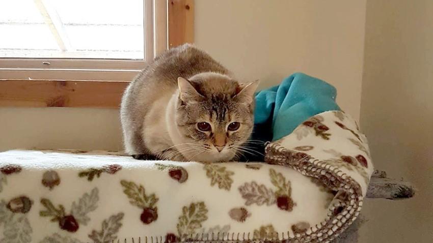 Die Katze, die die Geschichte ins Rollen brachte