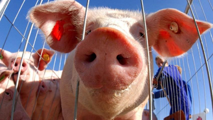 Produção de carne russa aumentou, e preços no mercado interno caíram, segundo analistas.