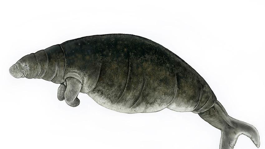 Sapi laut steller terakhir ditemukan di alam liar oleh pemburu bulu pada 1768.
