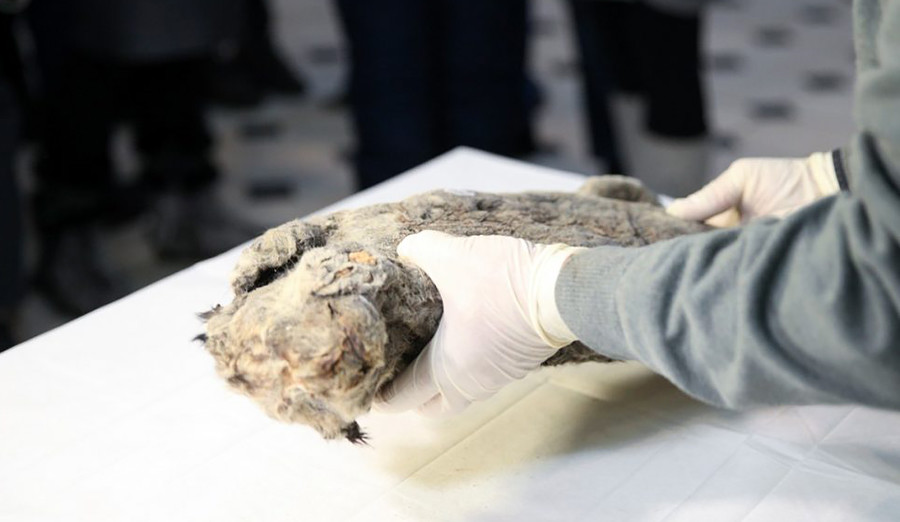 A well preserved corpse has been discovered in Yakutia