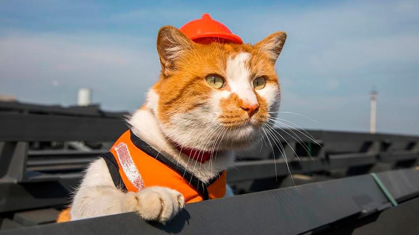 ケルチ海峡大橋の建設をネコが監...