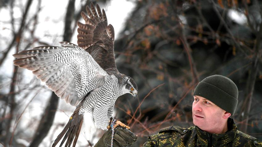 Главни циљ јастребова није лов на вране, већ да их држе даље од Кремља.