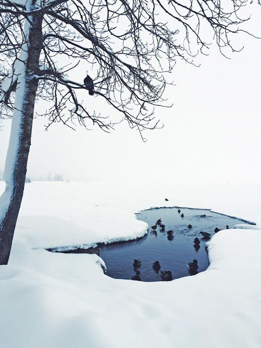 Најдовме податок во водичот дека зиме може да се премине езерото до манастирот Ивер, кое е оддалечено само 3 км од местото. Но штом се најдовме на езерото сфатив дека тоа е невозможна мисија – пред нас се протегаше потполно бело платно од снег и небо.