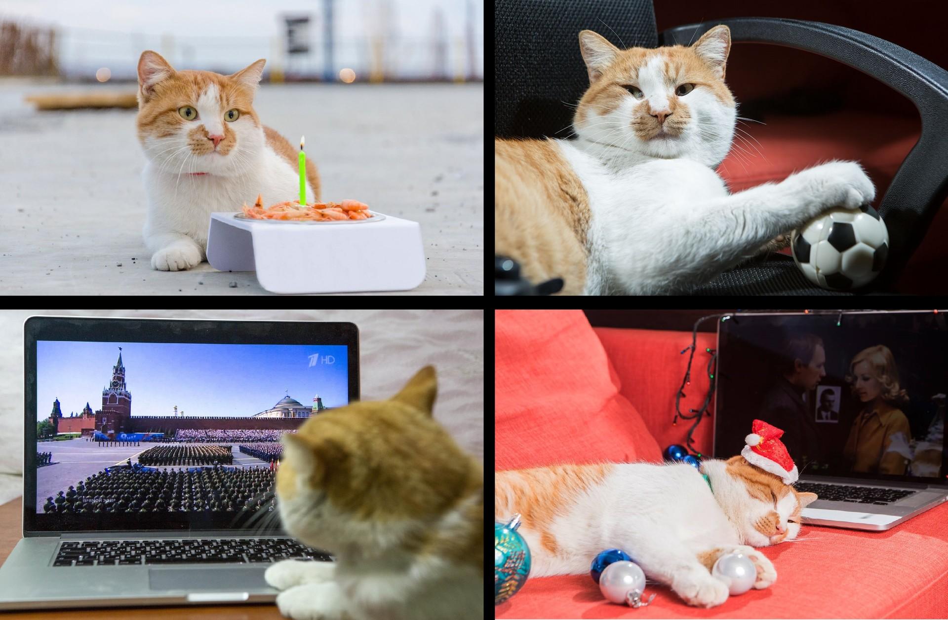 Котката на моста