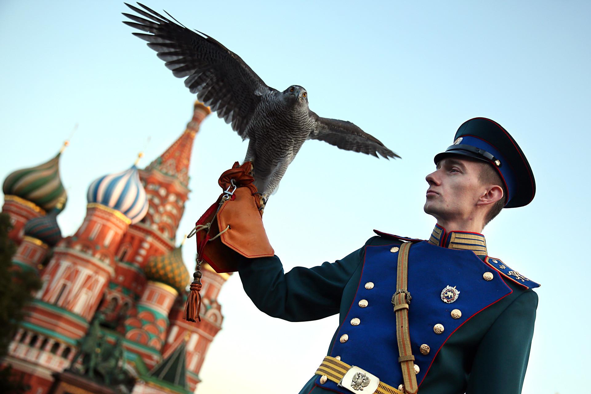 Membro do serviço ornitológico do Kremlin na cerimônia de encerramento do Festival de Música Militar Internacional Torre Spasskaia, na Praça Vermelha.