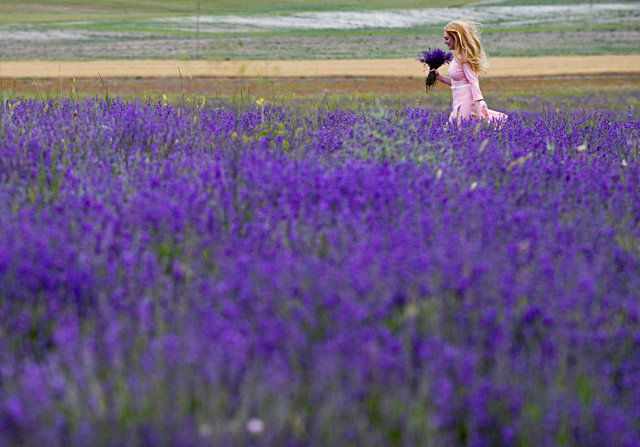 Жена оди низ поле од лаванда во близина на село во Бахчисарајскиот реон на полуостровот Крим.
