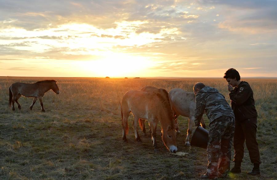 Руският президент Владимир Путин при пускането в природата на шест коня в Оренбургския държавен природен резерват.
