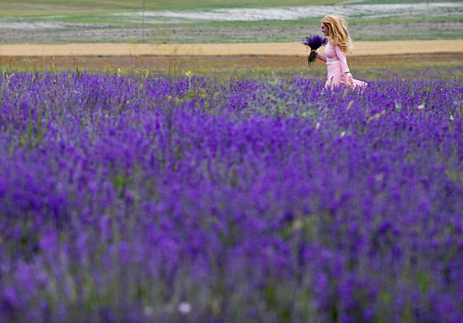 クリミアのバフチラサイ地区の村の近く、ラベンダーの花束を手に歩く女性