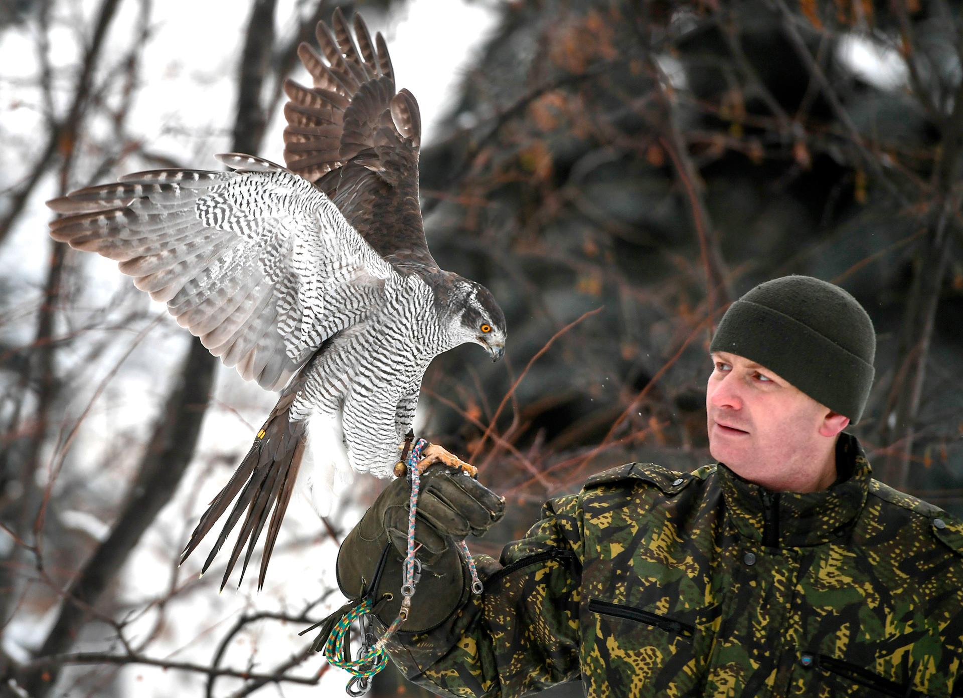 カラス用のオオタカは、6ヶ月間訓練されてから、カラス狩りができるかどうか評価される。