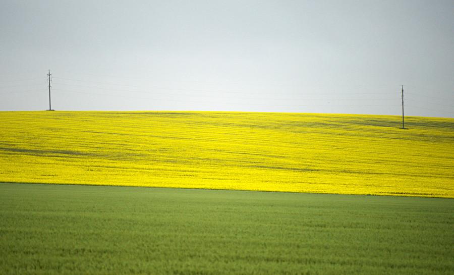 Sebuah padang luas dengan bunga-bunga yang bermekaran selama musim panas di Krai Krasnodarskiy.