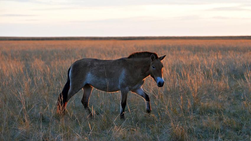 「一年中ずっと風。オレンブルグは周囲100キロをステップ(大草原)に囲まれているのでね」