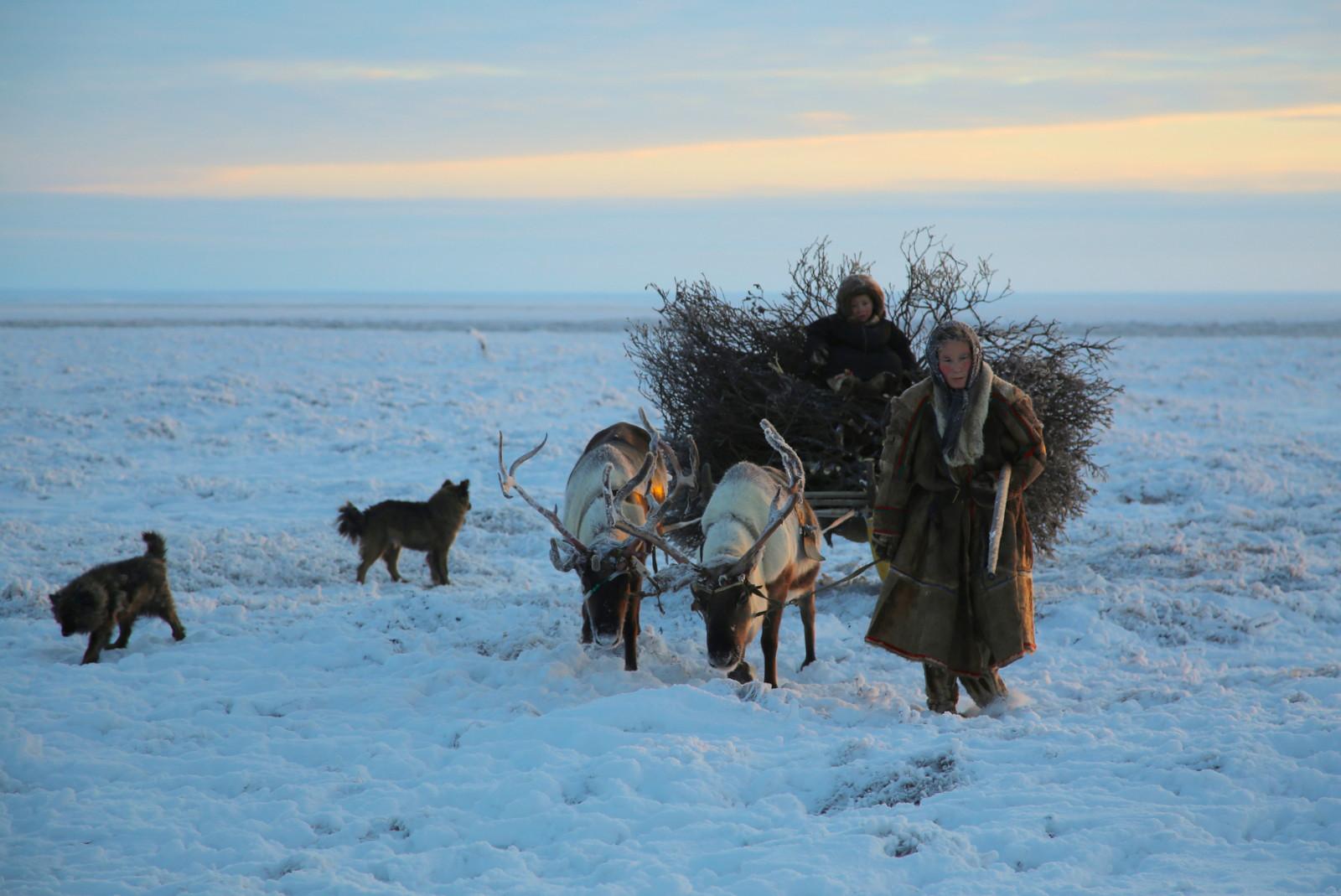 Albina Serotetto membawa anak laki-lakinya Pedava untuk memotong pohon willow pendek.