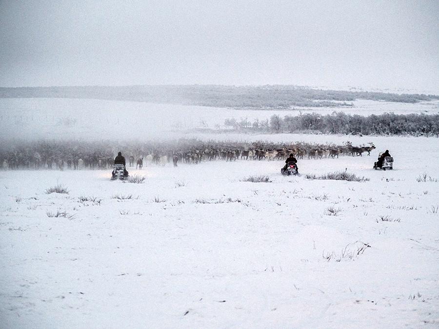 Un jour de travail ordinaire : les hommes dirigent un millier de rennes depuis la toundra vers l'enclos.