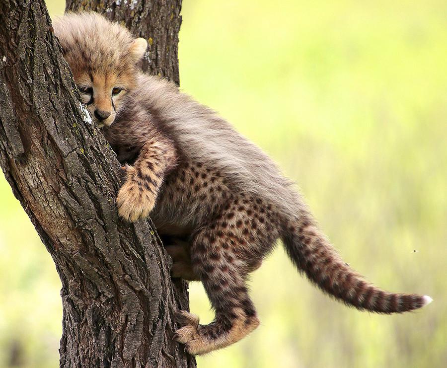 Todos os animais (e os humanos) são fofos quando pequenos, mas eles acabam crescendo e podem tentar atacar... os pôneis locais.