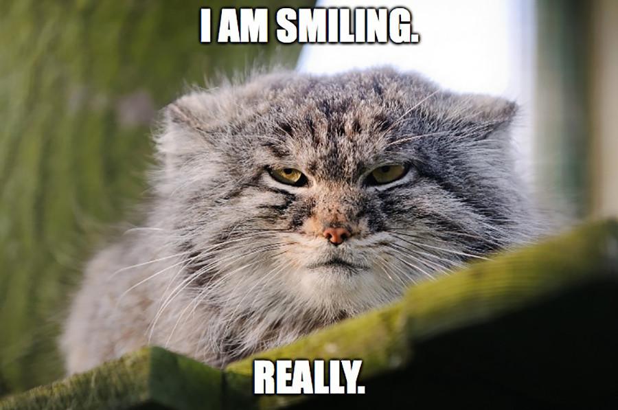 Download 66+  Gambar Kucing Ganas Paling Baru Gratis