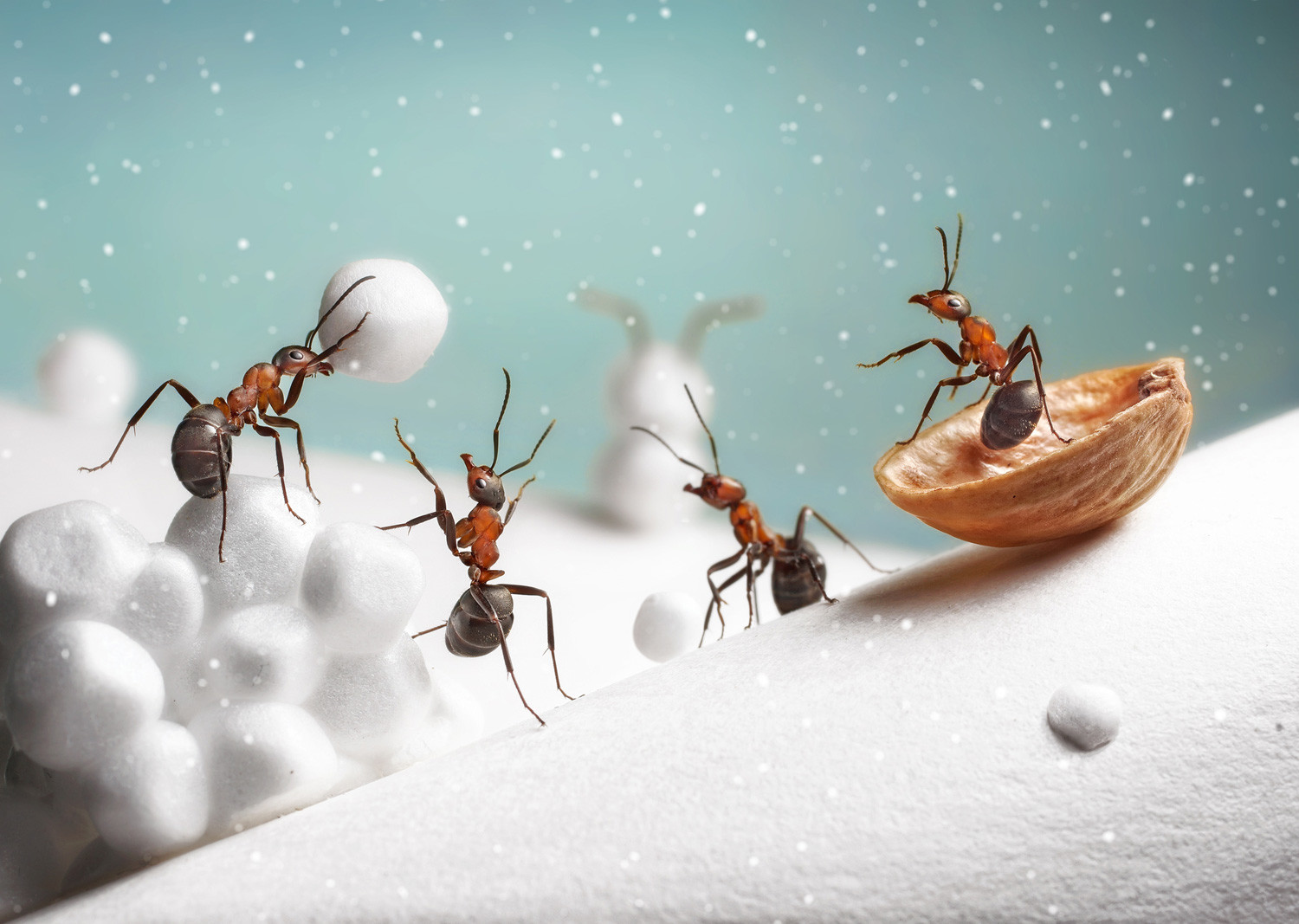 Insect antics: Russian photographer snaps stunning pics of complex ...