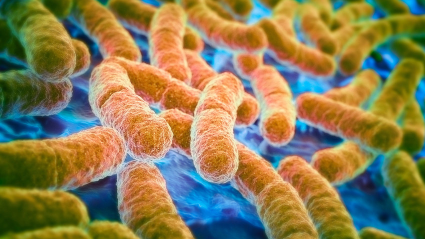 Russian scientists has discovered that the E.Coli bacteria is more resilient than previously thought.