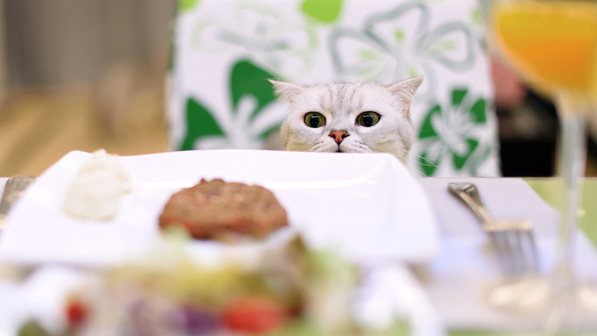 What pedigree cats are most popular among Russians? - Russia Beyond