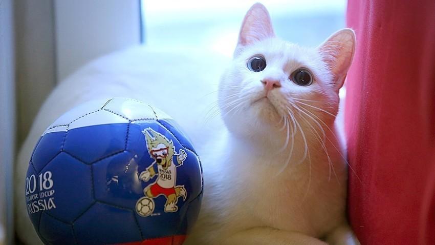 Surdez evitaria com que gato se estresse na hora de fazer previsões