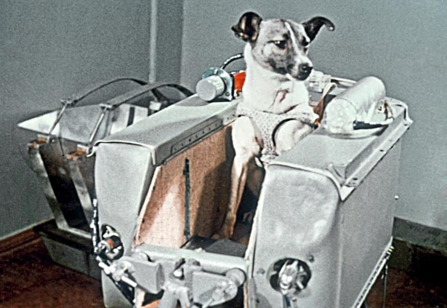La cagnolina Lajka