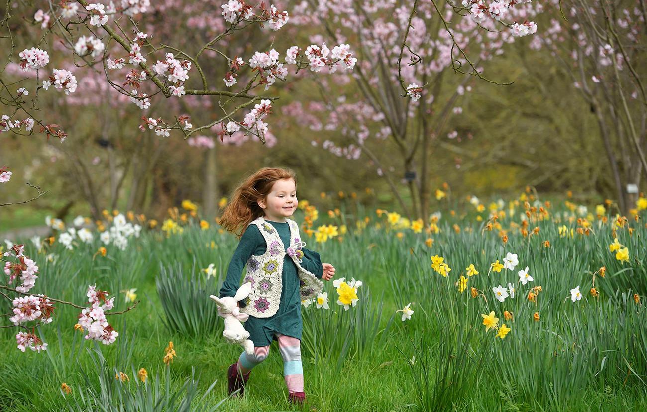 Seorang gadis cilik bermain di antara bunga-bunga musim semi menjelang Festival Paskah di Kew Gardens di London Barat, 30 Maret 2017.