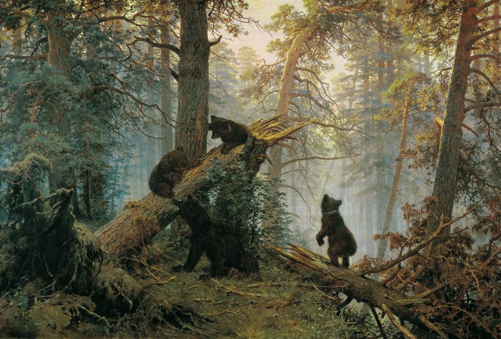 Mattina in una foresta di pini